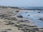 der Strand ist gut besucht :)