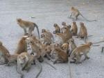 eine Menge Affen